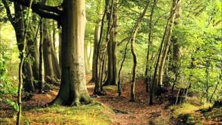 Muzika za opustanje i smirenje - Secret of the Elves, Dva sata, Opusti se i uzivaj, HD