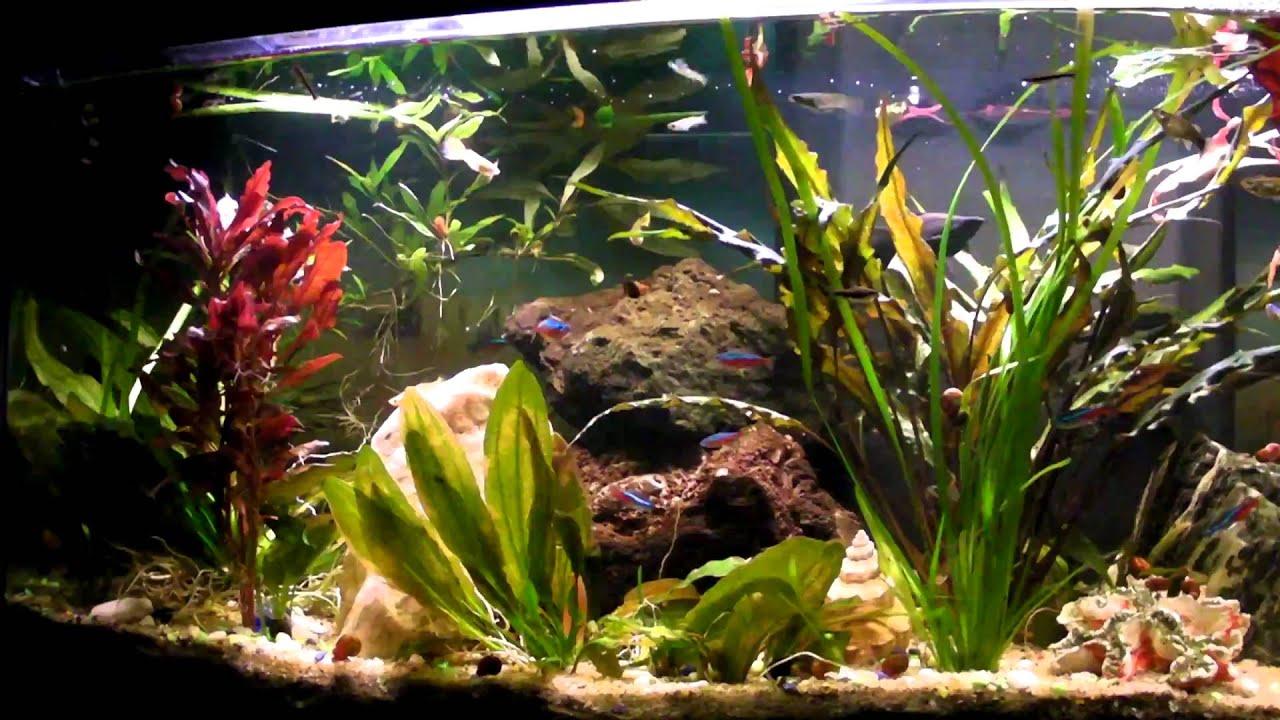 Fish Guppy Neon Molly Platty Aquarium Youtube