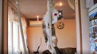 Что вытворяет Кошка ради мячика :)