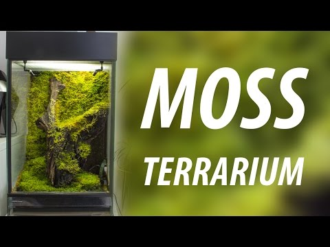 Moss terrarium with Epiweb background HD