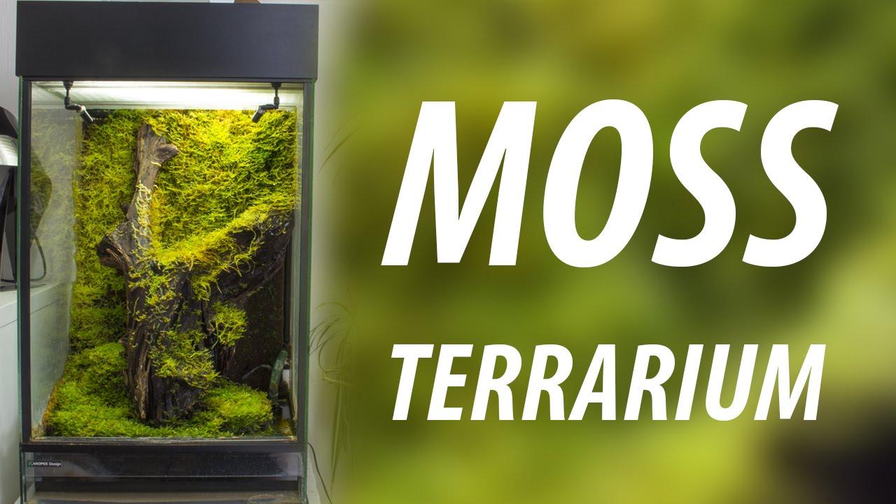 Moss Terrarium With Epiweb Background Hd Youtube