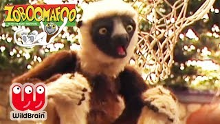 Zoboomafoo | EPISODE COMPILATION: Happy Lemur Day! | Animals For Kids