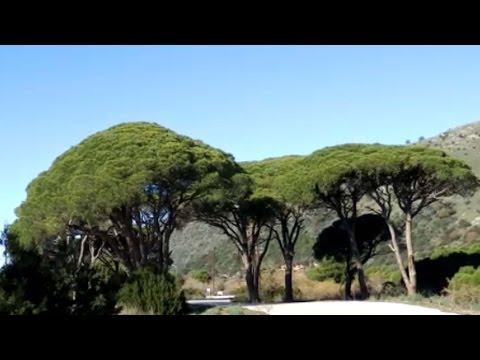 Δάσος Στροφυλιάς - Αχαΐα * Forest of Strofylia - Achaia