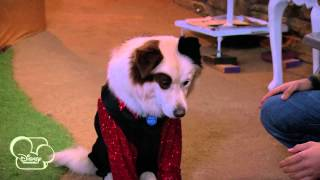 Dog With A Blog | My Parents Posted What?! | Disney Channel UK thumbnail