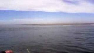 Delfines playas de sinaloa semana santa