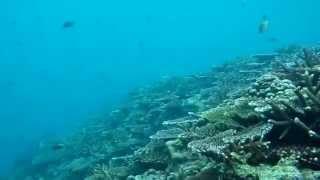 フサキビーチで行うシュノーケルツアー。 カタマランボートで約5分の距...