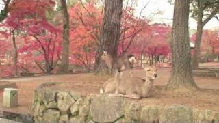 NARA Y MUSEO DEL MANGA - Japón 9 - AXM