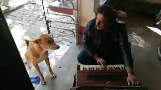 Teri meri dog vertion। Funny dog sing a Teri meri kahani song
