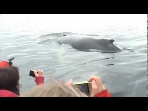 Les Baleines à Tadoussac 2.wmv