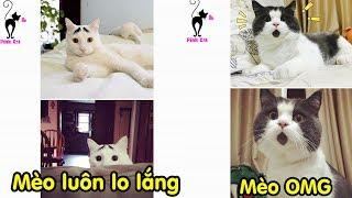 Top Các Bộ Lông Mèo Đẹp - Độc - Lạ có thể bạn chưa biết :D