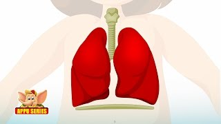 Learn Human Body - Respiratory System