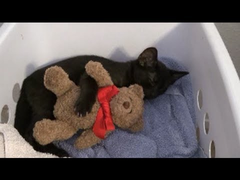 Cute Kitten Cuddles With Teddy Bear Youtube