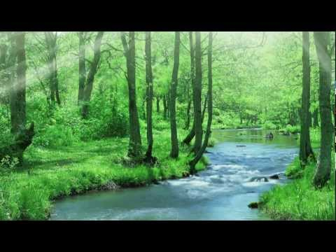Relaxing Sounds.Beautiful Forest.Bird Forest