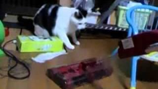 我が家に猫ちゃんの敵が来ました。(笑)
