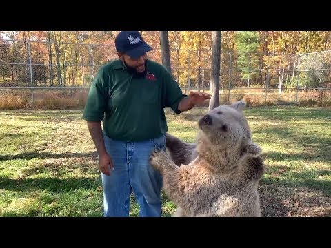 Orphaned bear is reunited with her human carer after years apart | Reunited with animals