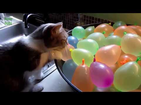 Funny Cats vs Balloons Compilation Vines 2017