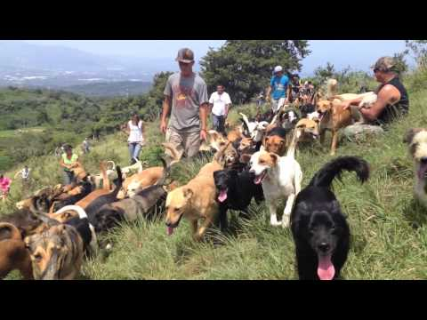 """Costa Rica's """"Land of the Mixed Breeds – A Natural Paradise for Dogs and Dog Lovers Alike"""