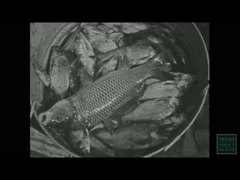 Fish for the Future (original film) -Texas Parks and Wildlife [Official]