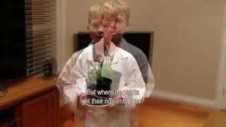 Why is Seaweed Brown?, SECOND PLACE 2015 Sleek Geeks Science Eureka Prize Primary