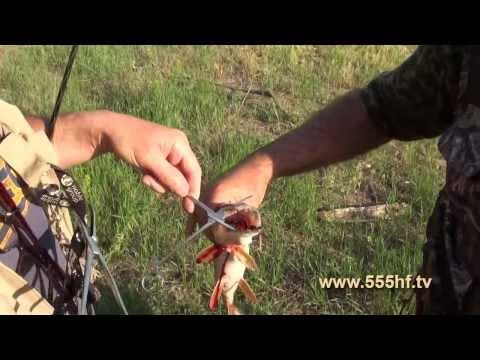 ловля бели летом видео