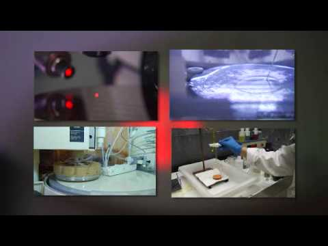 IBM's Microelectronics Research Laboratory