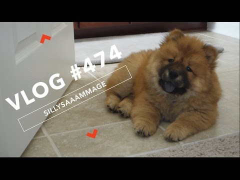 VLOG #474 | WELCOME HOME - MEET YUNA!