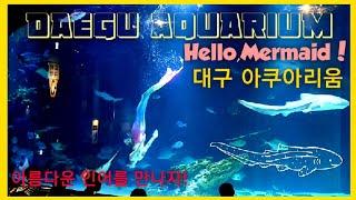 대구 아쿠아리움 Part 1    Daegu Aquar…
