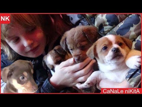 NUOVI ARRIVATI !! SALVIAMO I CUCCIOLI !! Non comprate cani adottateli ! Cercano casa - Canale Nikita