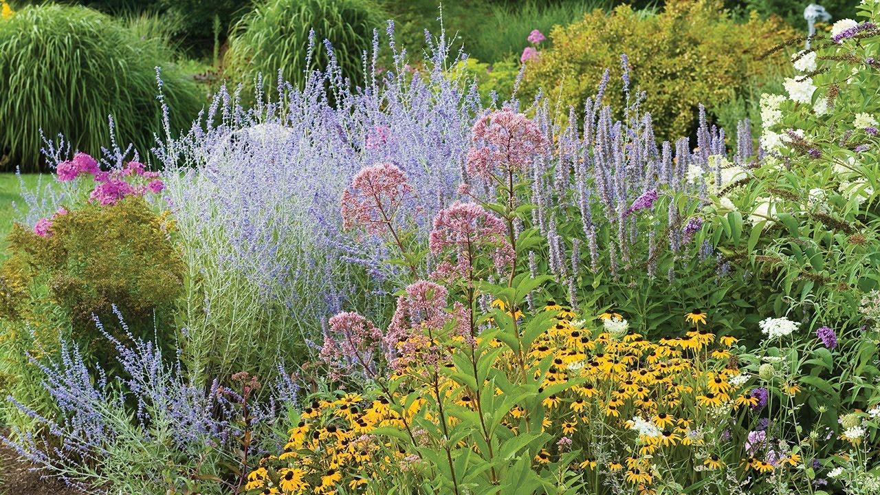 perennial flowers border, sun, shade perennial plants, seeds, Natural flower