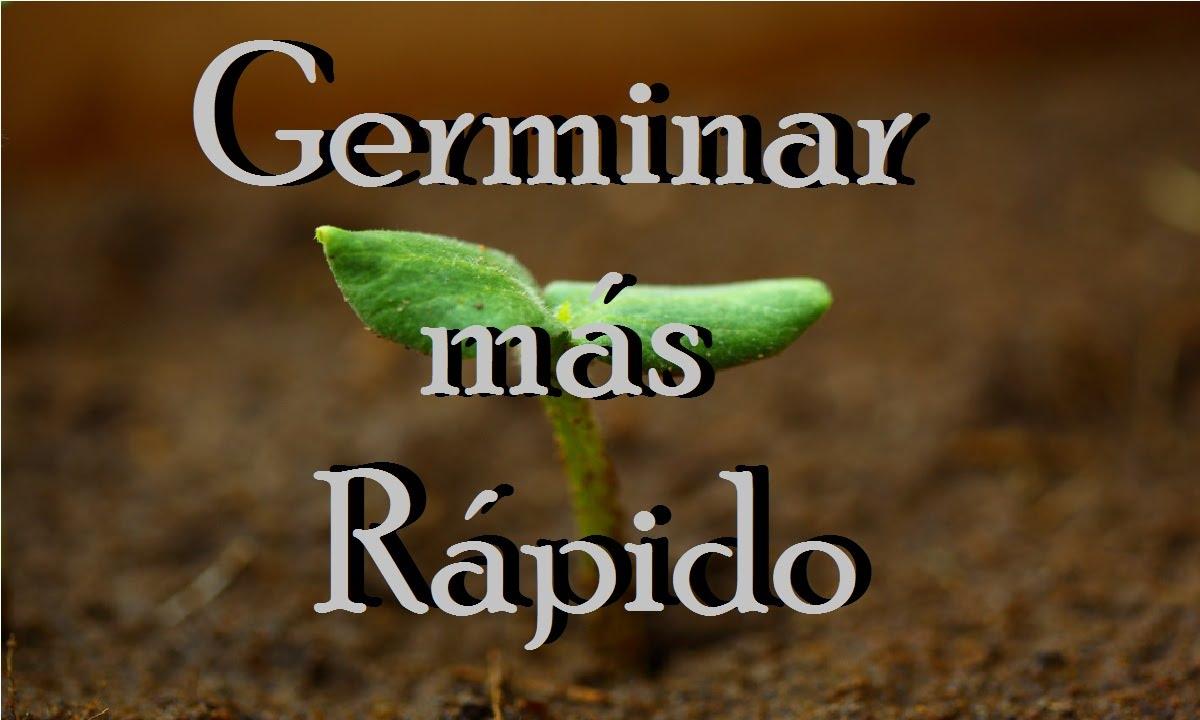 como germinan las semillas