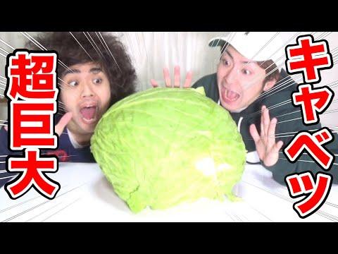 【大食い】10Kgの超巨大キャベツを食べきるまで帰れません!!