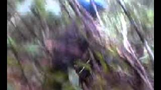 Download Video Mesum anak Smp Di Hutan MP3 3GP MP4