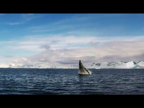 Antarctica whales are jumping