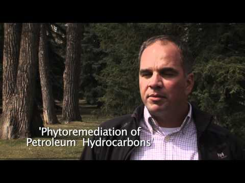 ConocoPhilips Canada - Phytoremediation of Petroleum Hydrocarbons