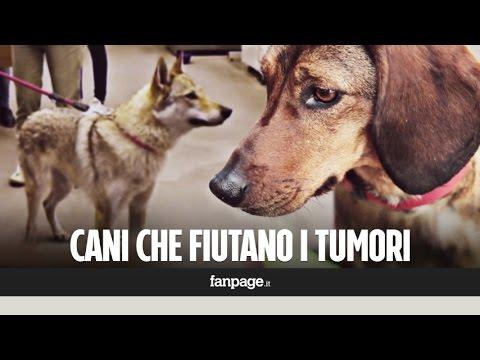 """Lotta ai tumori, anche in Italia i cani che """"fiutano"""" il cancro: """"Ecco come li addestriamo"""""""