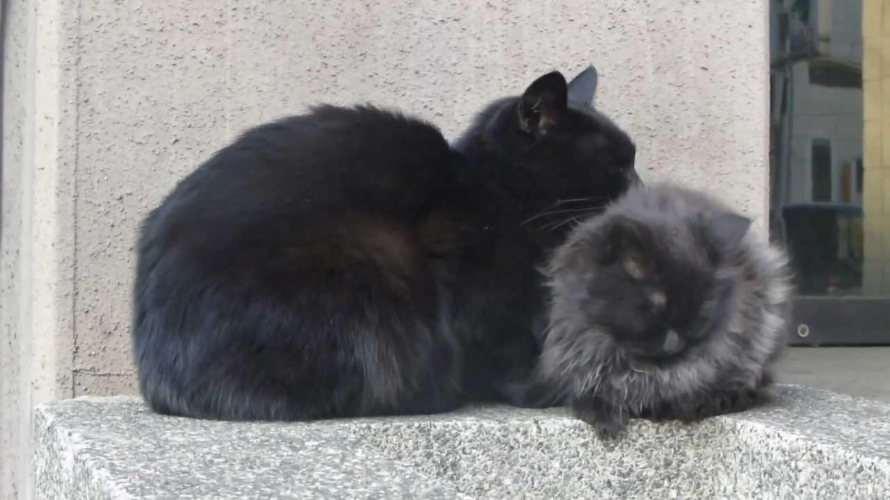 黒猫親と長毛黒子猫