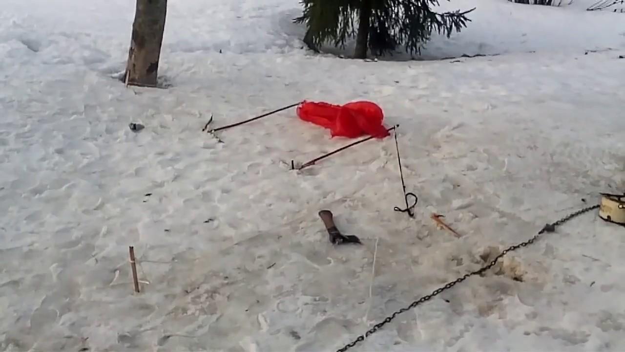 Лучок для ловли птиц своими руками фото 979