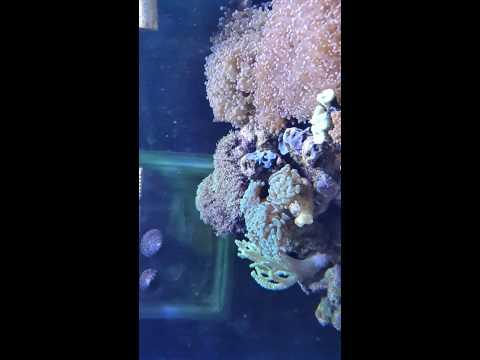 125 gallon REEF Aquarium