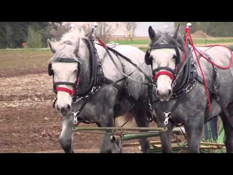 Horse Drawn Equipment-Taylor Horsefest