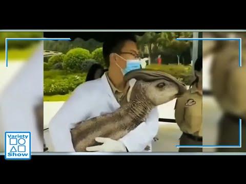 Esto es demasiado!! En las redes se habla del primer dinosaurio clonado en China!!