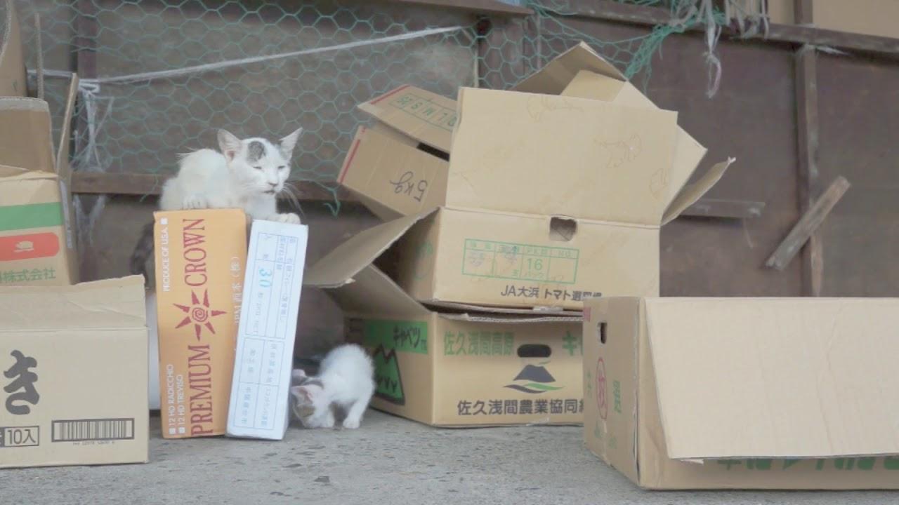 一人遊びの猫と好奇心な子猫 YouTube