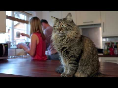 How To Help When Your Cat Is Not Eating