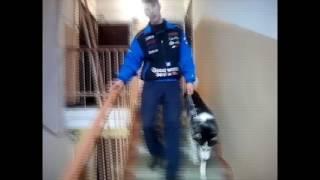 как правильно с собакой выходить с квартиры.