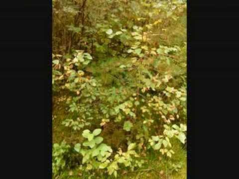 Autumn, Fall, Harvest, Vestnes Norway