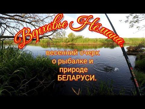 Верховье  Нёмана. Весенний очерк о рыбалке и природе Беларуси.
