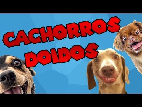 Cachorros doidos 1  Narrado pelo Google Tradutor