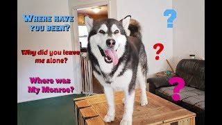 Tricking My Dog | He Was Home Alone | Will He Know What I Did?