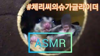 슈가글라이더 #ASMR