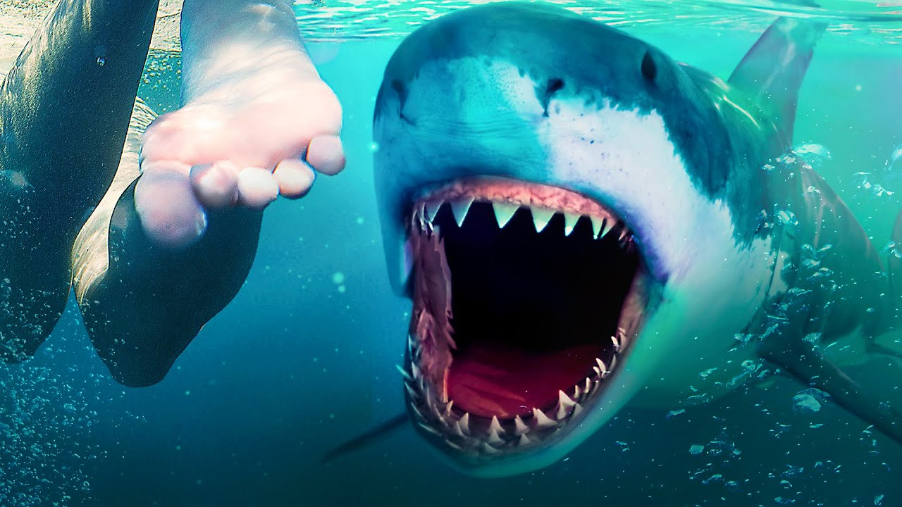 Download Makhluk Laut yang Membuat Megalodon Punah Masih Hidup
