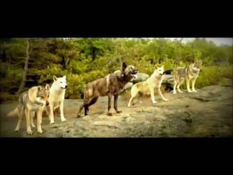 pub societé générale parodie loup